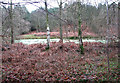 TM1239 : Algae-covered pond on the edge of Clubs Heath, Belstead by Evelyn Simak