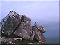 SD4972 : Dog on the rocks, Warton Crag by Karl and Ali