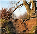 SJ9493 : Broken Tree Branch by Gerald England
