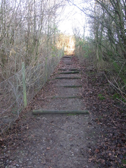 Footpath steps through the copse,  Wilmcote