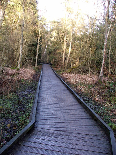 Boardwalk - Bolam Lake
