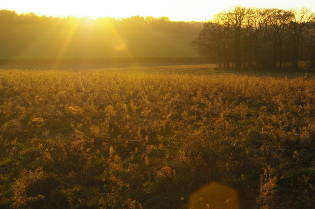 Low winter sunlight, fields south of Farnborough