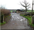 ST6792 : Muddy access to farm buildings, Whitfield by John Grayson