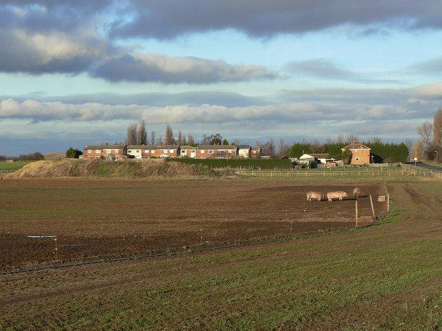 Near Pollington