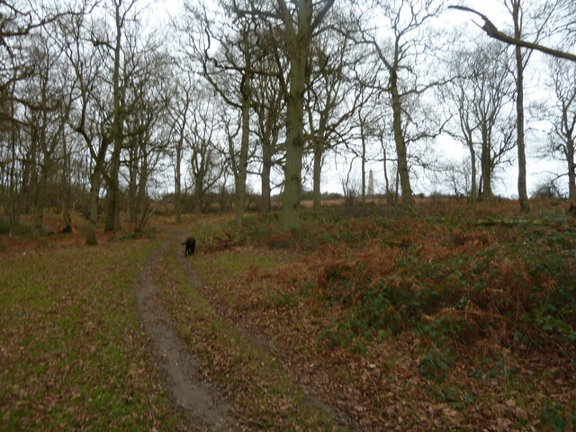 Clambering up out of Birchen Wood