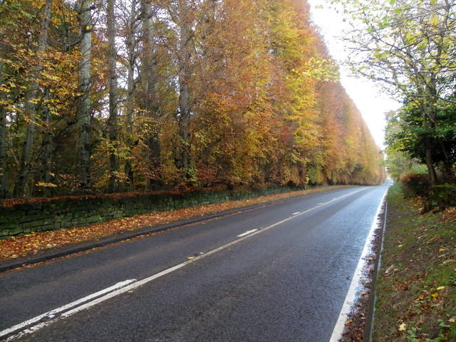The Meikleour Beech Hedge