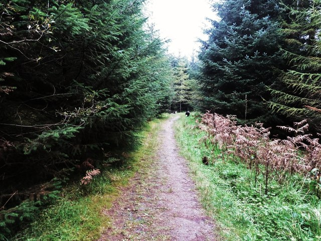 A track in Laurieston Forest