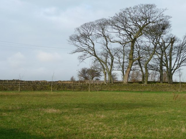 A stand of winter trees