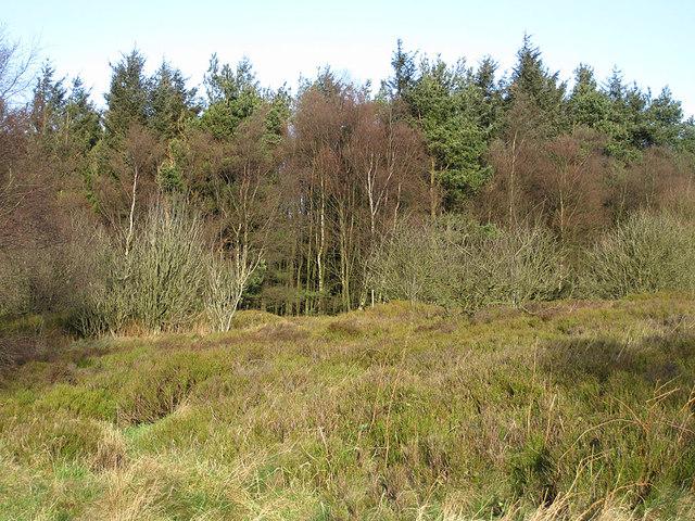 Kilburn Moor Plantation