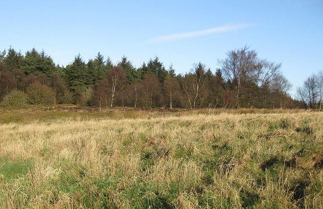 Edge of Kilburn Moor Plantation