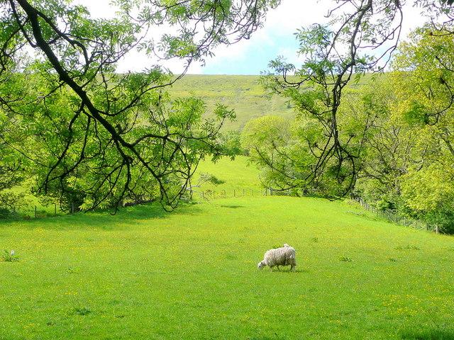 Sunny pasture