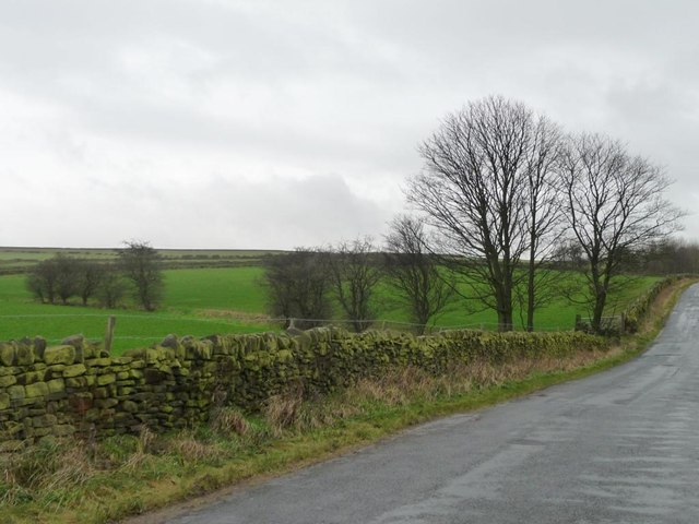 Winter trees along Horn Lane