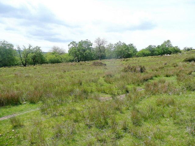 Cefn Hill access land