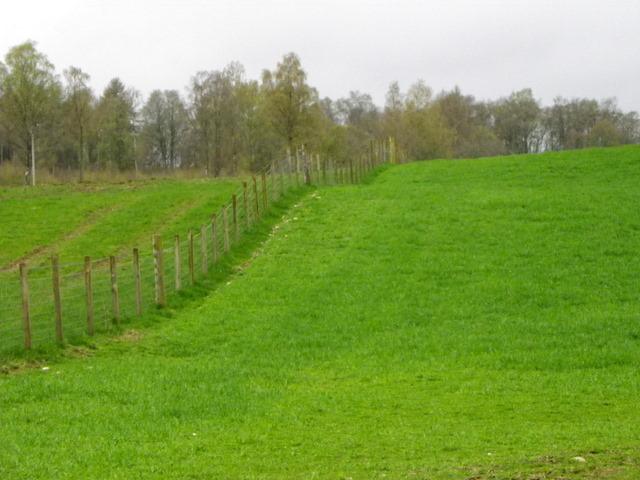 Woodland edge, Kinclaven