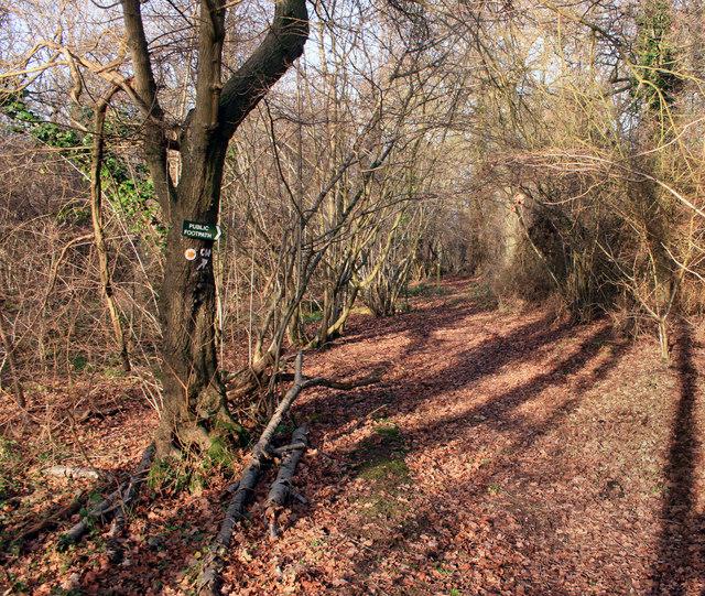 The Chiltern Way in Oakley Wood