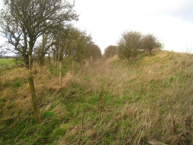Park Pale - Cottington's Hill