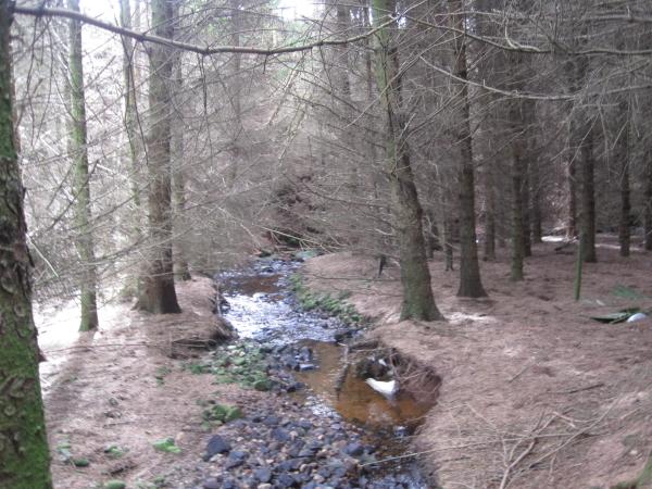 Lino Beck and Footpath through Davygill Plantation