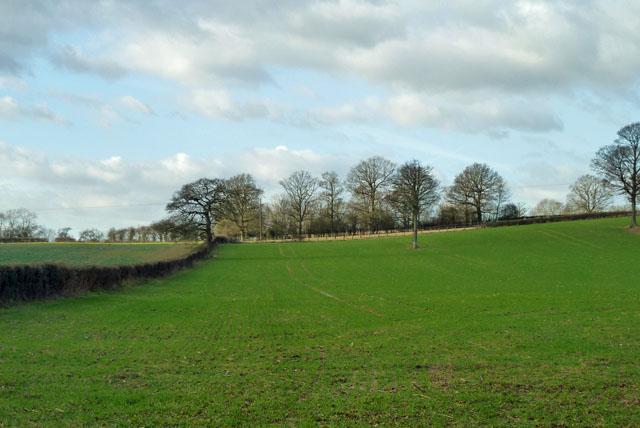 Field west of Hale Oak Road