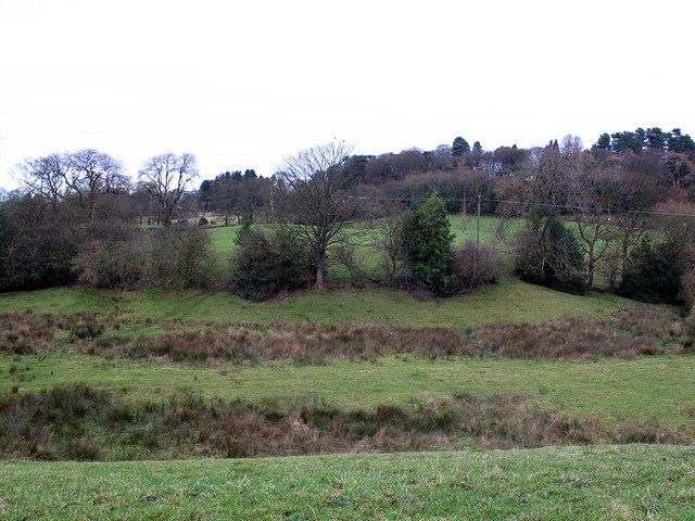 Field below Well Lane
