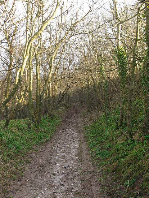 Track, Firle Plantation