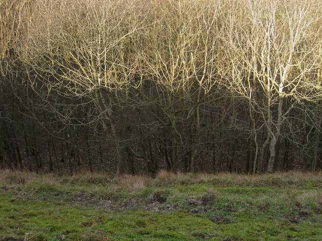 Old Chalk Pit, Firle Plantation