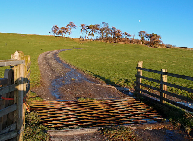 Cattle Grid, Coldstorms Farm