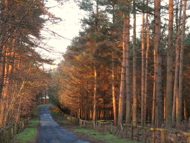 The drive to Minsteracres in Barleyhill Plantation