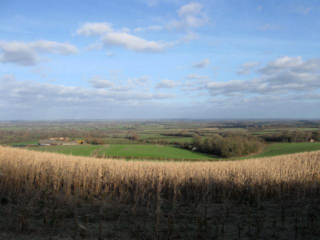 Link Field (2)