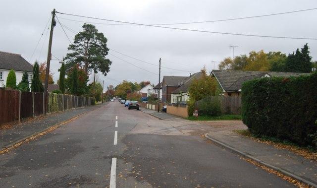 Salisbury Grove