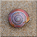 SD2707 : Snail shell in the Formby dunes by Gary Rogers