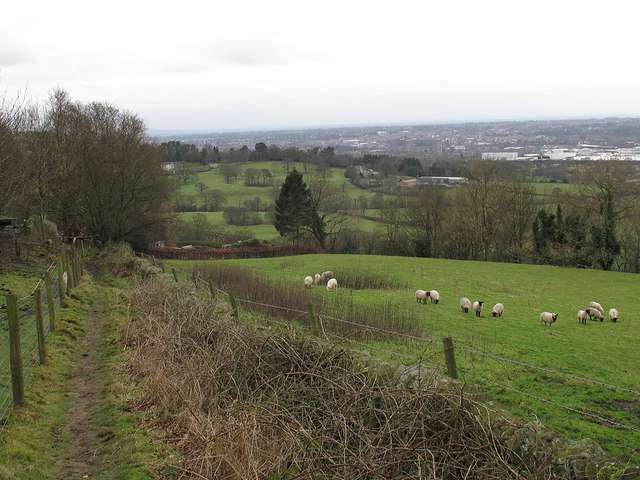 Footpath and sheep