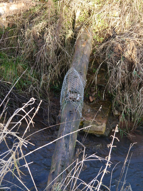 Fenn Trap Near Eccles Tofts