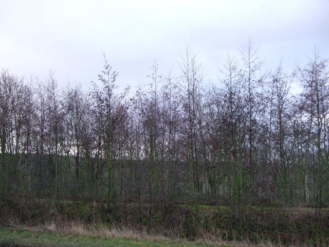Woodland beside Pontefract Road