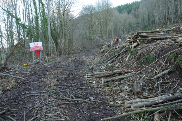Forestry work in Penyard Park