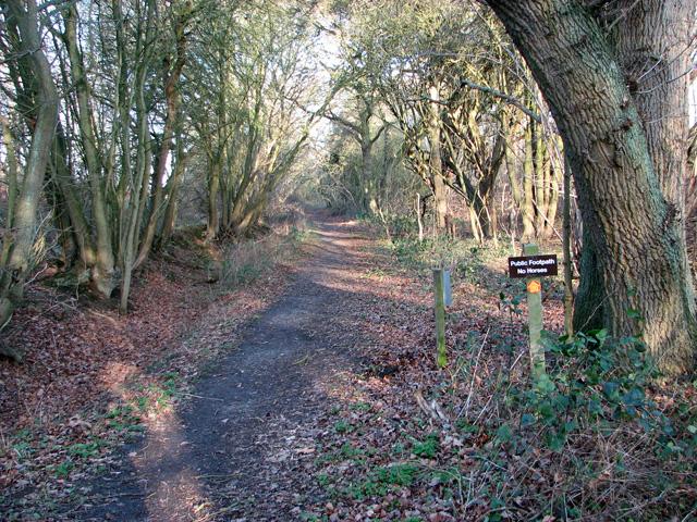 Footpath through Holly Wood, Bentley