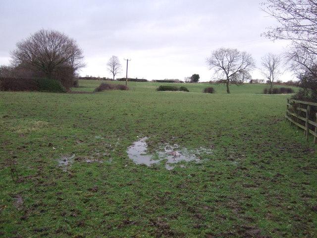 Waterlogged grazing, Swillington