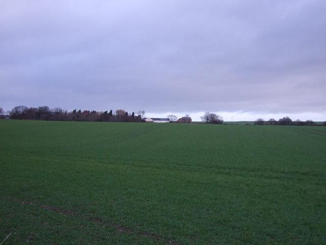 Farmland off Swillington Lane