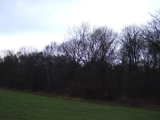 Peckfield Plantation