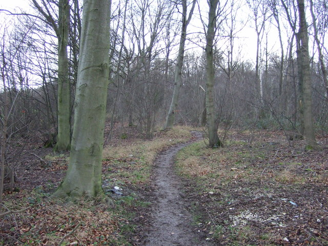 Footpath in Peckfield Plantation