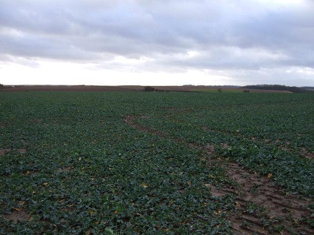 Crop field off the B1217