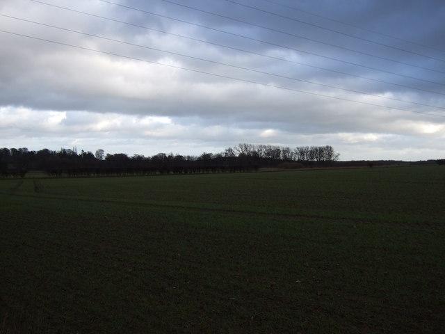 Farmland off Collier Lane