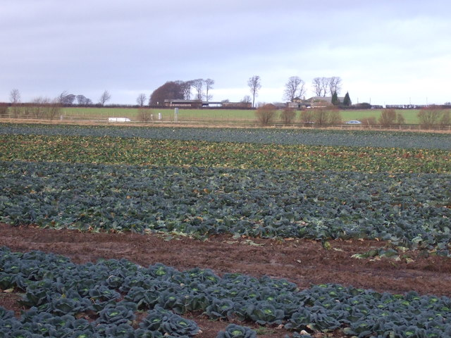 Crop field off the A656