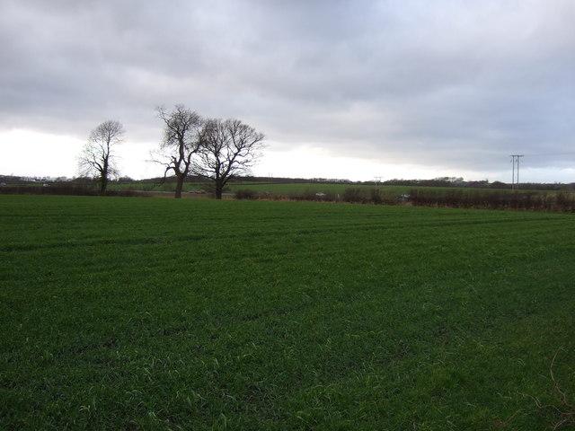 Farmland off Barwick Road