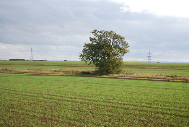 A single tree by Cuckold's Green Rd