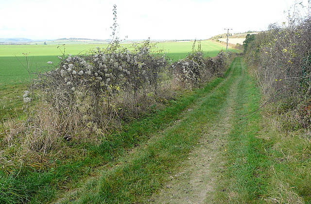 Bridleway towards Kingsclere