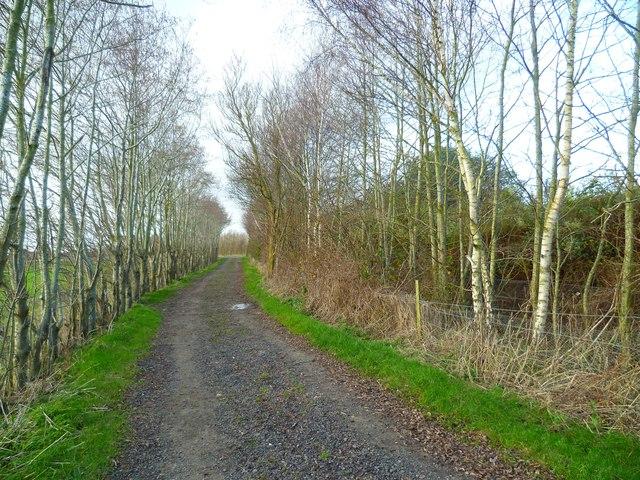 Path to Bosham