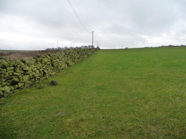 Green field, green wall