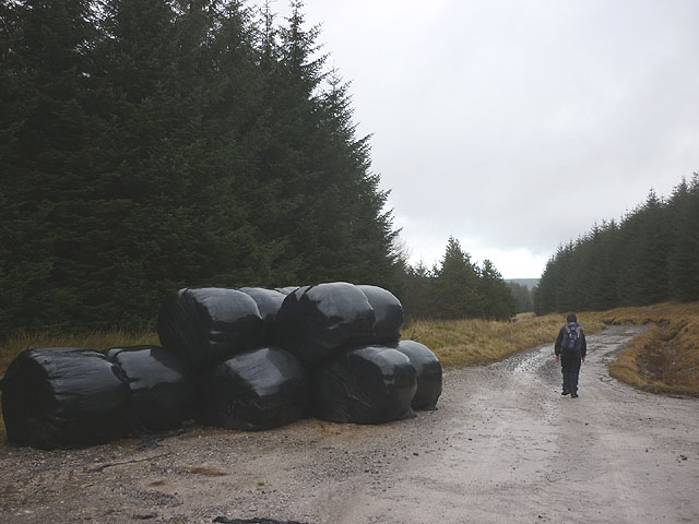 Silage bales by the bridleway, Green Haw