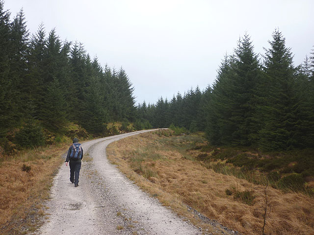 Forestry track near High Greenfield