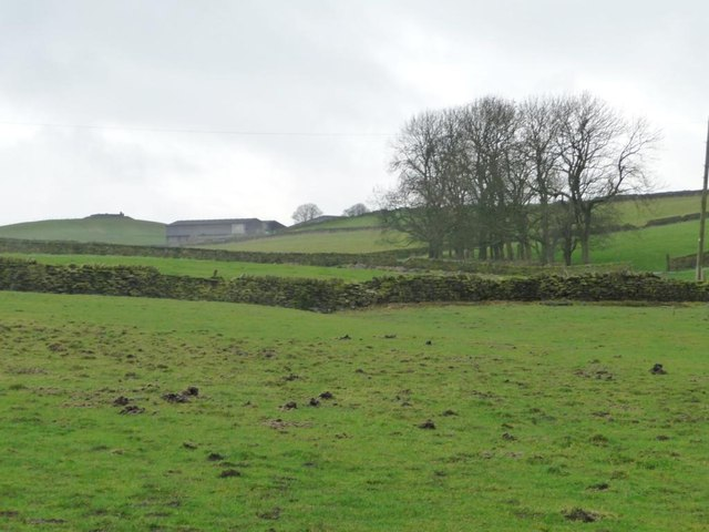 Clump of trees below Haddingley Hill